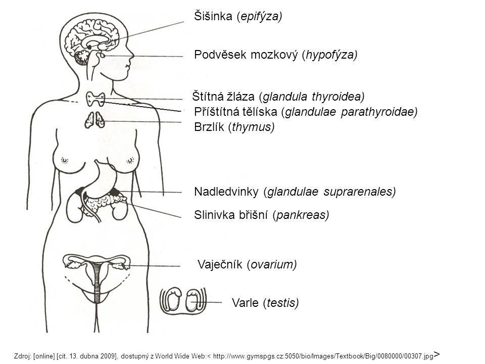 Šišinka (epifýza) Podvěsek mozkový (hypofýza) Štítná žláza (glandula thyroidea) Příštítná tělíska (glandulae parathyroidae) Brzlík (thymus) Slinivka břišní (pankreas) Vaječník (ovarium) Varle (testis) Nadledvinky (glandulae suprarenales) Zdroj: [online] [cit.