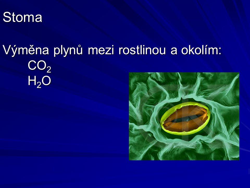 Ekologie fotosyntézy - zásobení vodou