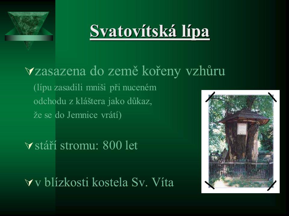 Svatovítská lípa Svatovítská lípa  zasazena do země kořeny vzhůru (lípu zasadili mniši při nuceném odchodu z kláštera jako důkaz, že se do Jemnice vr