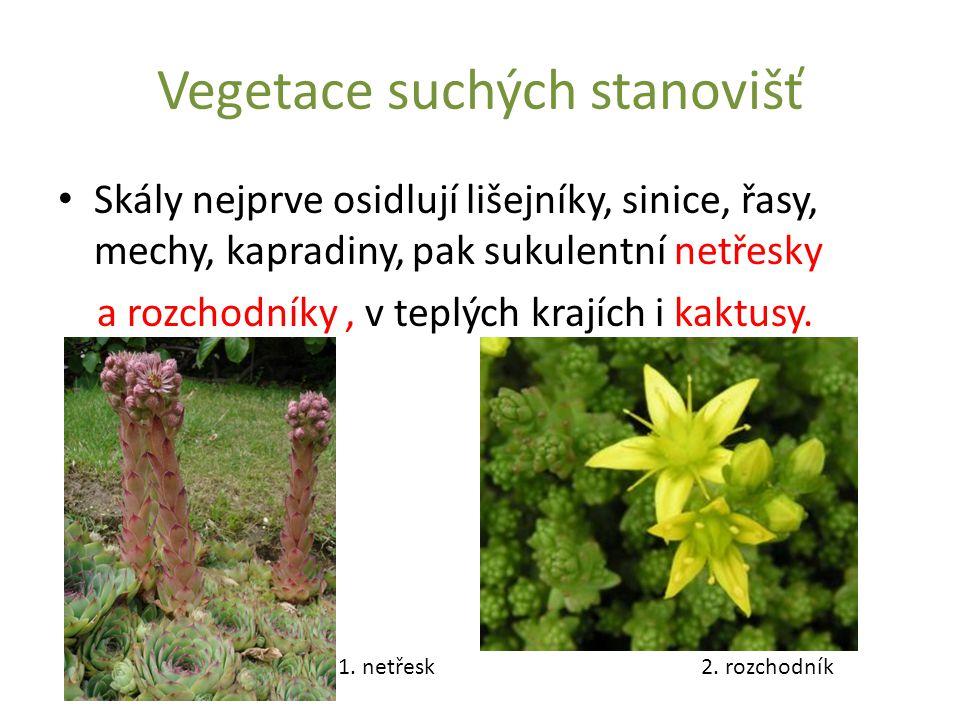 Vegetace suchých stanovišť Skály nejprve osidlují lišejníky, sinice, řasy, mechy, kapradiny, pak sukulentní netřesky a rozchodníky, v teplých krajích