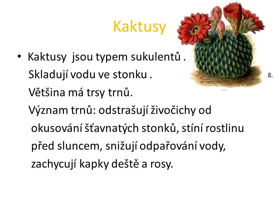 Kaktusy Kaktusy jsou typem sukulentů. Skladují vodu ve stonku.