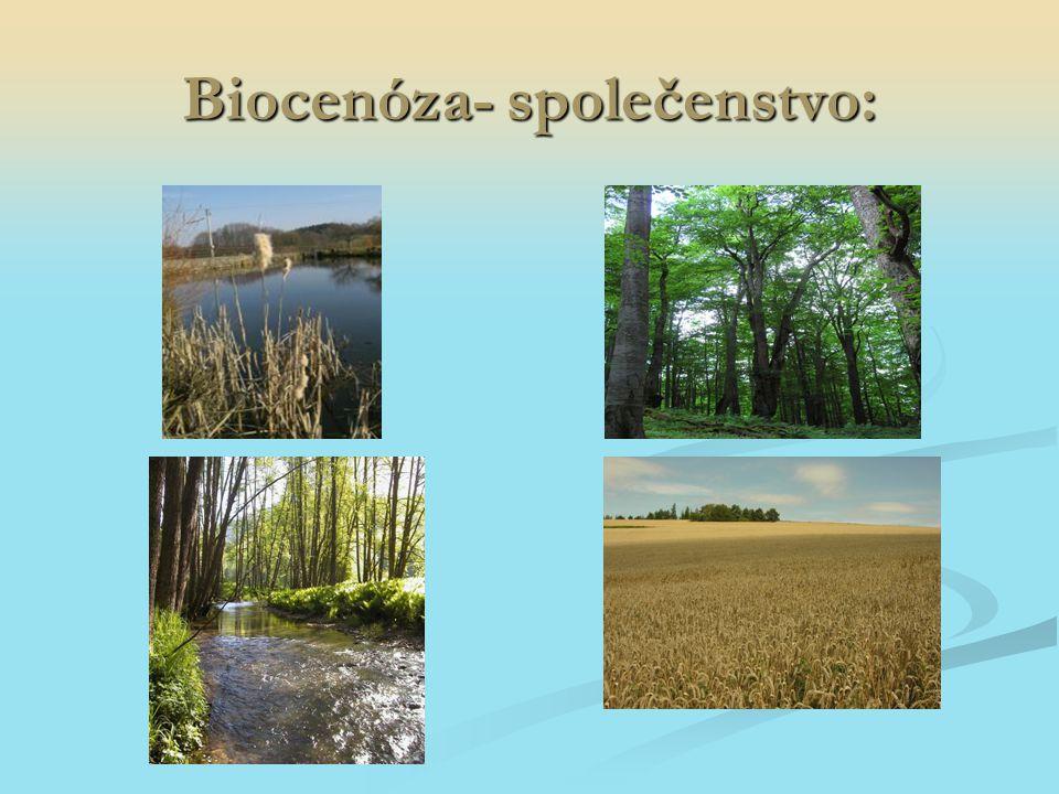 Biocenóza- společenstvo: