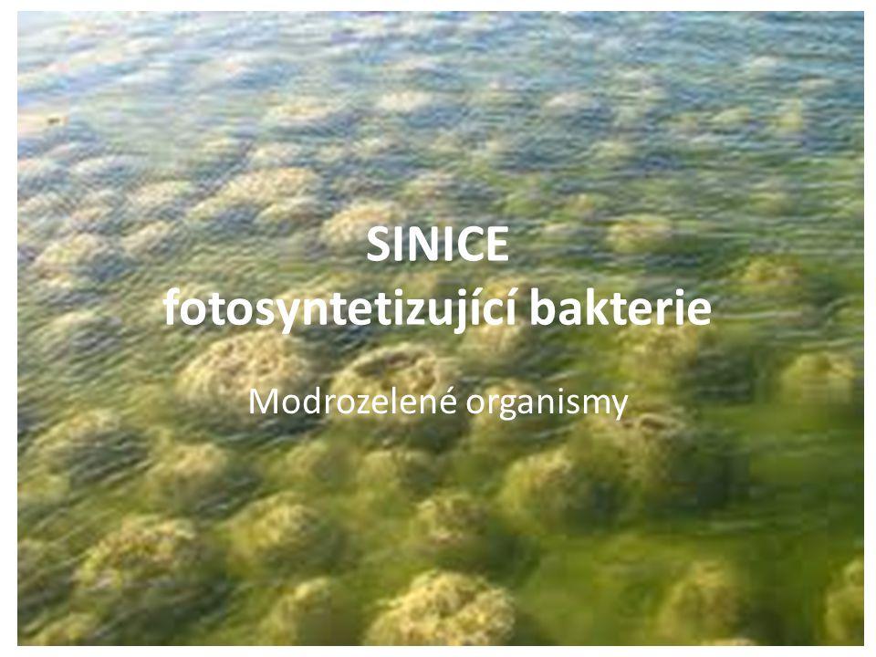 SINICE fotosyntetizující bakterie Modrozelené organismy