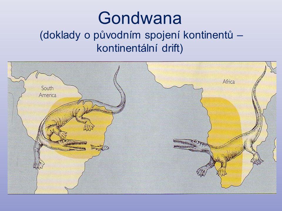 Gondwana (doklady o původním spojení kontinentů – kontinentální drift)