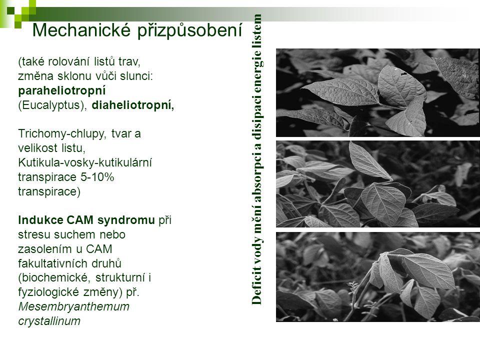 Deficit vody mění absorpci a disipaci energie listem (také rolování listů trav, změna sklonu vůči slunci: paraheliotropní (Eucalyptus), diaheliotropní, Trichomy-chlupy, tvar a velikost listu, Kutikula-vosky-kutikulární transpirace 5-10% transpirace) Indukce CAM syndromu při stresu suchem nebo zasolením u CAM fakultativních druhů (biochemické, strukturní i fyziologické změny) př.