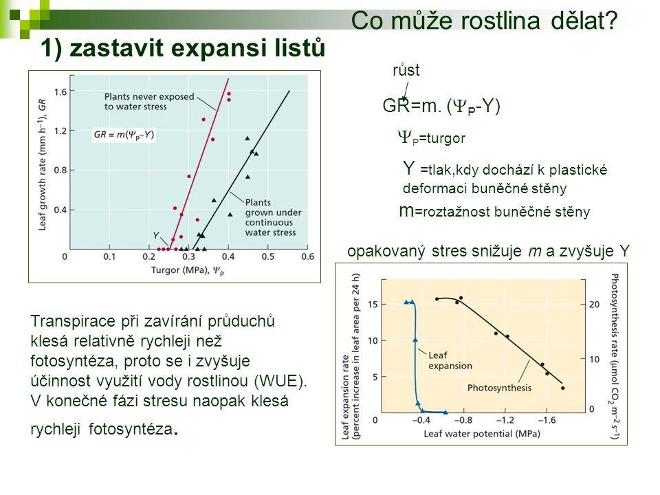 2)Translokace asimilátů Translokace asimilátů je ještě méně citlivá na postupné snižování vodního potenciálu rostliny.To dovoluje rostlinám redistribuovat zdroje při akutním stresu suchem (př.