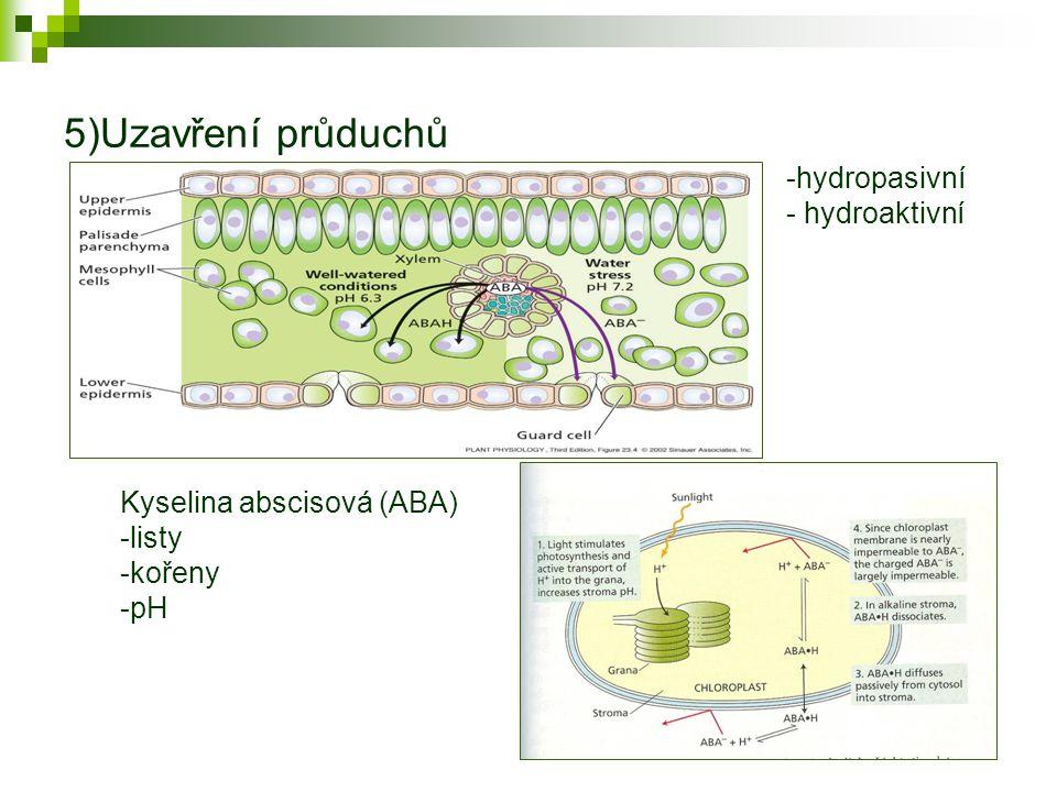 Osmotické přizpůsobení rostliny Klesající matriční (vodní) potenciál půdy -hromadění iontů ve vakuole (neinhibují enzymy) -hromadění osmotik v cytoplasmě (aminokyselina prolin, cukry, složitější alkoholy-polyoly, glycin-betain-kvarterní amin)- dny, týdny Deficit vody zvyšuje odpor toku vody -transport v půdě -transport ve stonku-embolie-kavitace (vod potenciál -1 až-2 MPa) -aquaporiny v kořeni a listu.