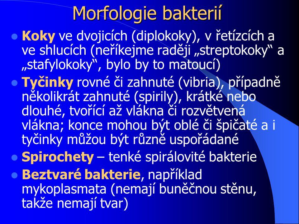 """Morfologie bakterií Koky ve dvojicích (diplokoky), v řetízcích a ve shlucích (neříkejme raději """"streptokoky a """"stafylokoky , bylo by to matoucí) Tyčinky rovné či zahnuté (vibria), případně několikrát zahnuté (spirily), krátké nebo dlouhé, tvořící až vlákna či rozvětvená vlákna; konce mohou být oblé či špičaté a i tyčinky můžou být různě uspořádané Spirochety – tenké spirálovité bakterie Beztvaré bakterie, například mykoplasmata (nemají buněčnou stěnu, takže nemají tvar)"""