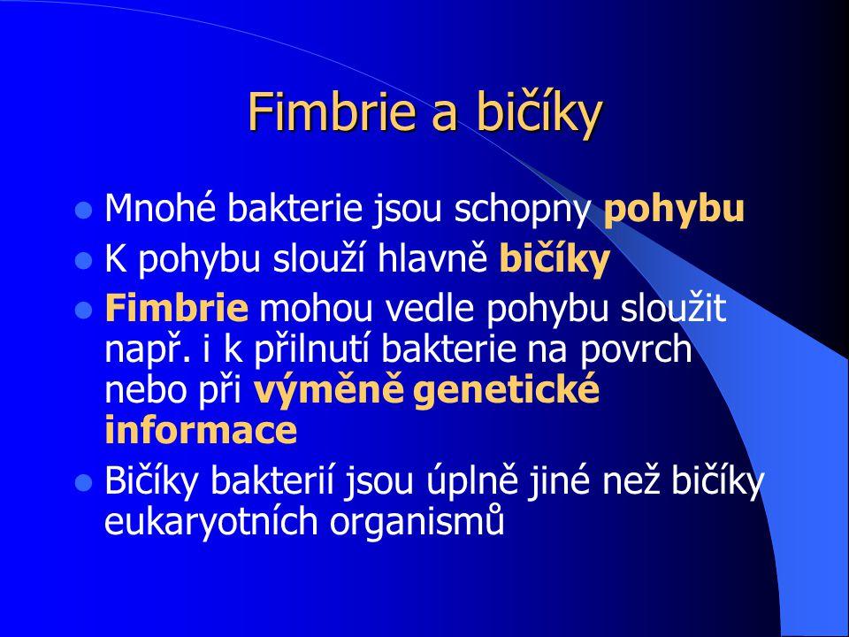 Fimbrie a bičíky Mnohé bakterie jsou schopny pohybu K pohybu slouží hlavně bičíky Fimbrie mohou vedle pohybu sloužit např.