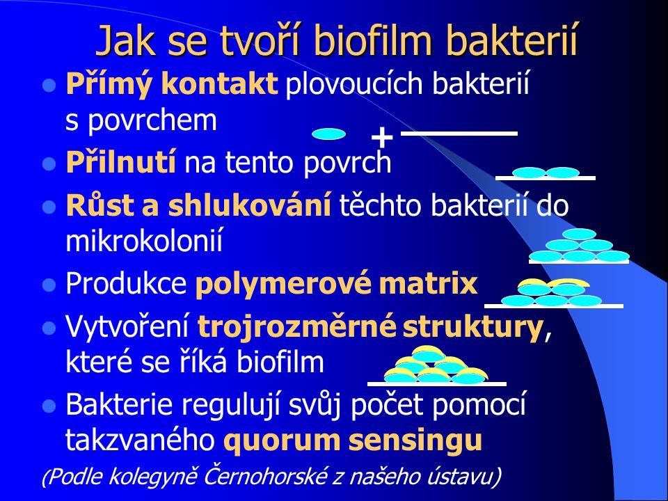 Přímý kontakt plovoucích bakterií s.povrchem Přilnutí na tento povrch Růst a shlukování těchto bakterií do mikrokolonií Produkce polymerové matrix Vytvoření trojrozměrné struktury, které se říká biofilm Bakterie regulují svůj počet pomocí takzvaného quorum sensingu ( Podle kolegyně Černohorské z našeho ústavu) Jak se tvoří biofilm bakterií +