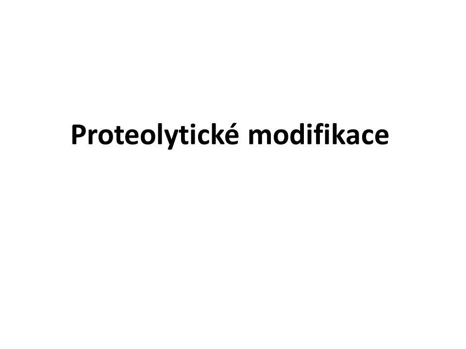 Proteolytické modifikace
