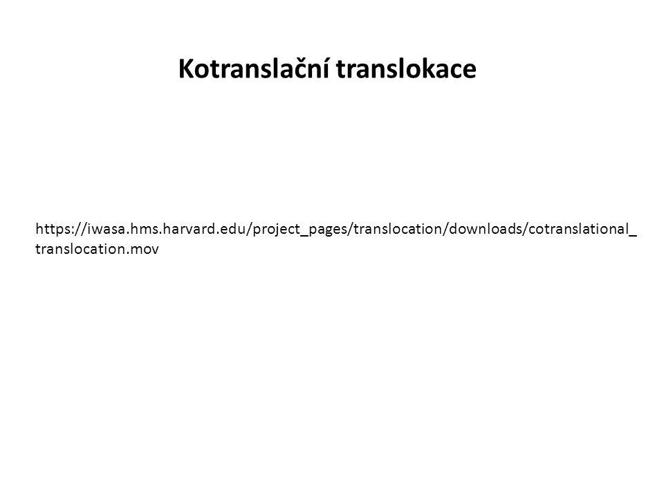 Kotranslační translokace https://iwasa.hms.harvard.edu/project_pages/translocation/downloads/cotranslational_ translocation.mov