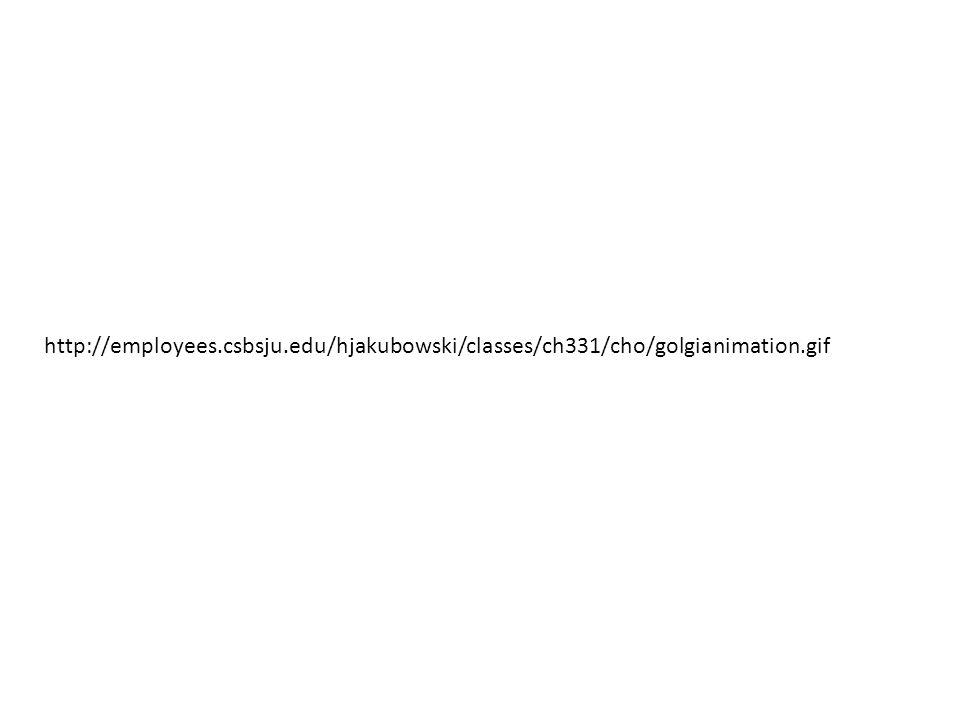 http://employees.csbsju.edu/hjakubowski/classes/ch331/cho/golgianimation.gif