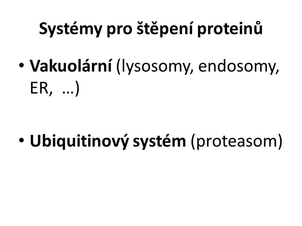 Systémy pro štěpení proteinů Vakuolární (lysosomy, endosomy, ER, …) Ubiquitinový systém (proteasom)