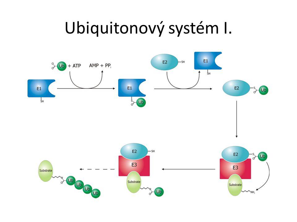 Ubiquitonový systém I.