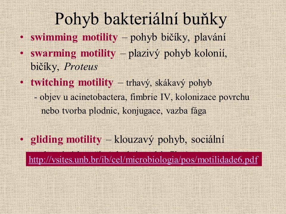 Pohyb bakteriální buňky swimming motility – pohyb bičíky, plavání swarming motility – plazivý pohyb kolonií, bičíky, Proteus twitching motility – trha