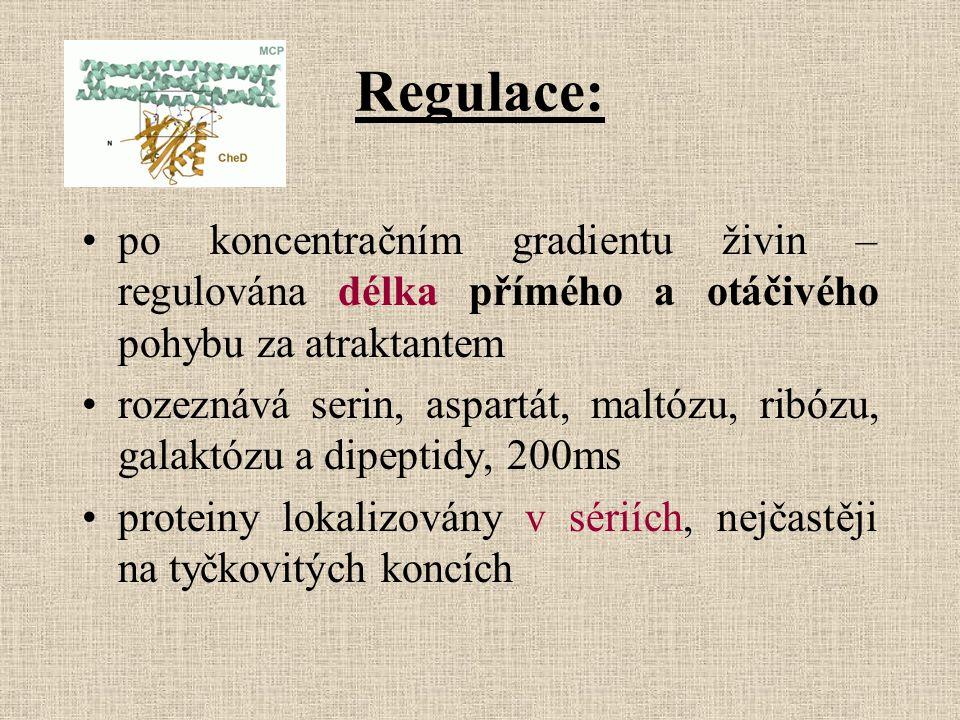 Regulace: po koncentračním gradientu živin – regulována délka přímého a otáčivého pohybu za atraktantem rozeznává serin, aspartát, maltózu, ribózu, ga