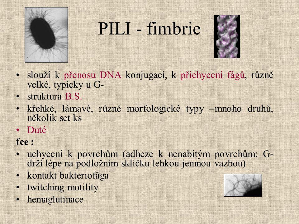 PILI - fimbrie slouží k přenosu DNA konjugací, k přichycení fágů, různě velké, typicky u G- struktura B.S. křehké, lámavé, různé morfologické typy –mn