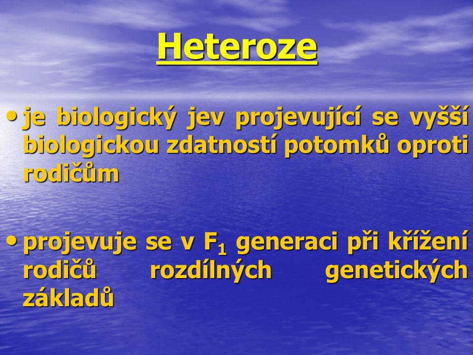 Heteroze je biologický jev projevující se vyšší biologickou zdatností potomků oproti rodičům je biologický jev projevující se vyšší biologickou zdatno