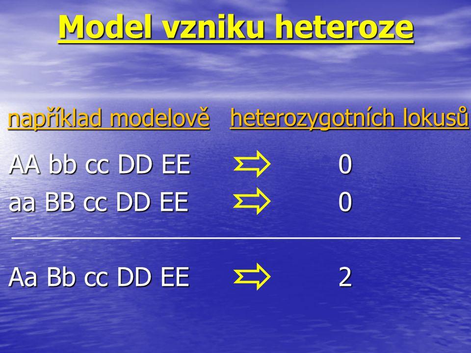 Model vzniku heteroze AA bb cc DD EE0 aa BB cc DD EE0 Aa Bb cc DD EE2 například modelově heterozygotních lokusů