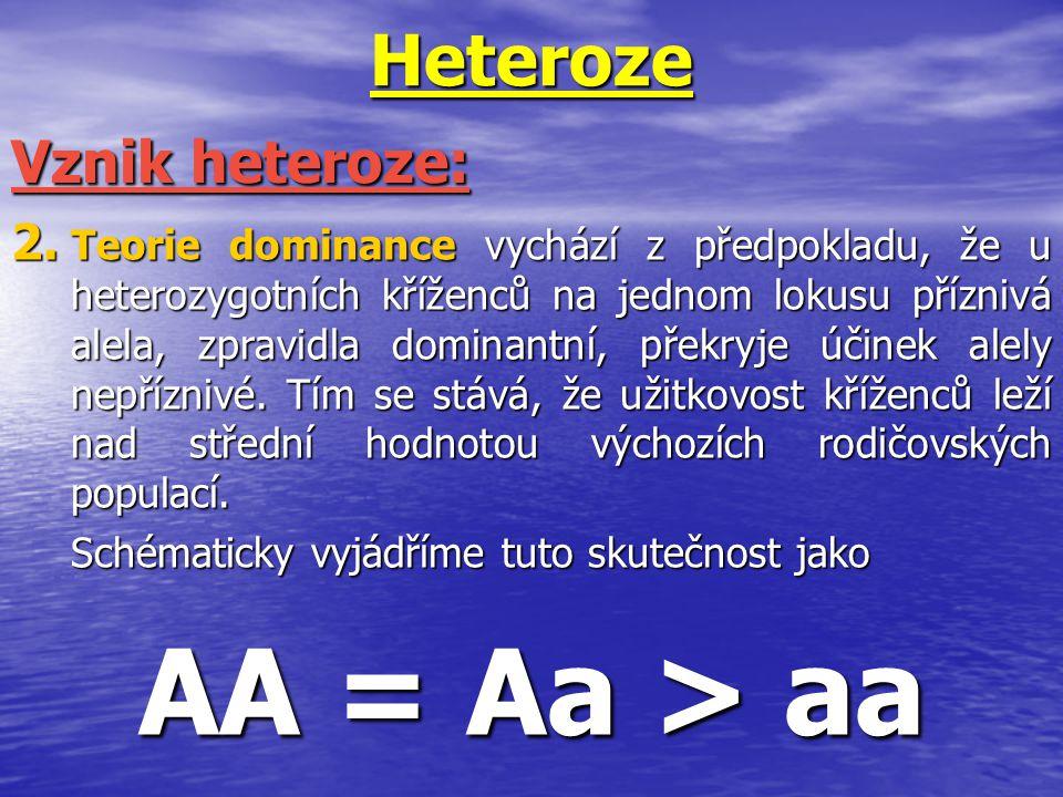 Heteroze 2. Teorie dominance vychází z předpokladu, že u heterozygotních kříženců na jednom lokusu příznivá alela, zpravidla dominantní, překryje účin