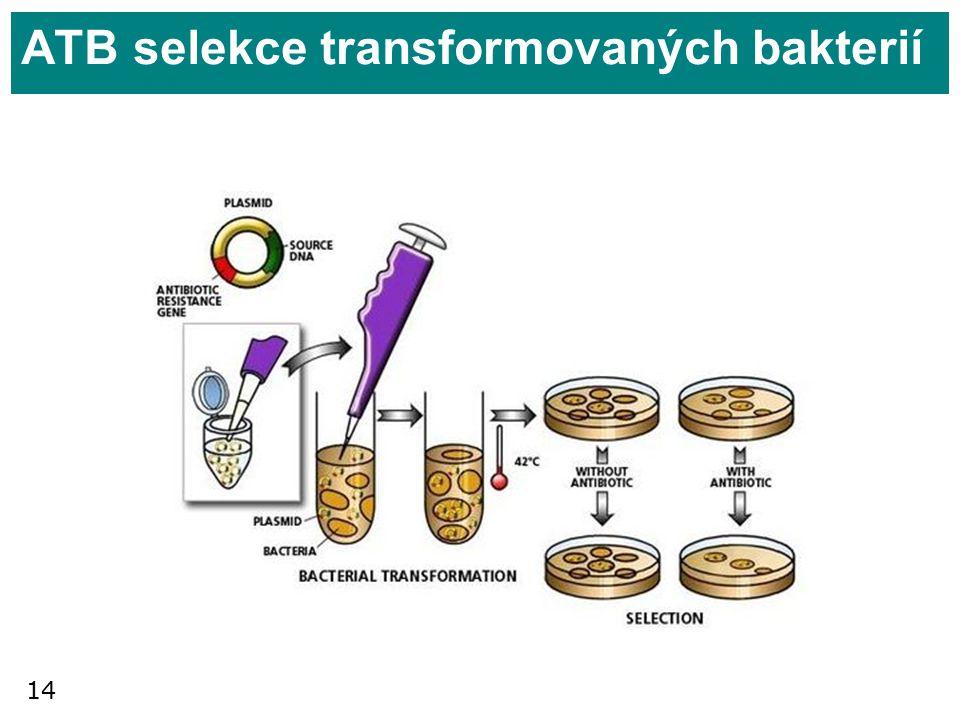 14 ATB selekce transformovaných bakterií
