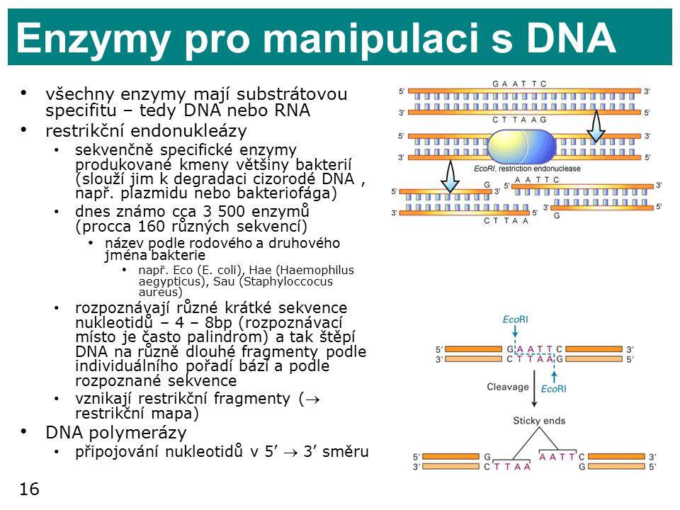 16 Enzymy pro manipulaci s DNA všechny enzymy mají substrátovou specifitu – tedy DNA nebo RNA restrikční endonukleázy sekvenčně specifické enzymy produkované kmeny většiny bakterií (slouží jim k degradaci cizorodé DNA, např.
