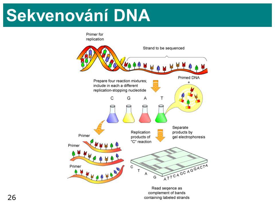 26 Sekvenování DNA
