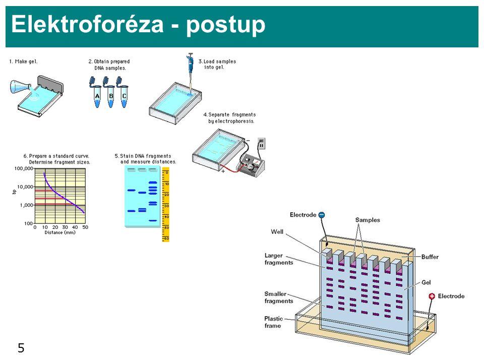 5 Elektroforéza - postup