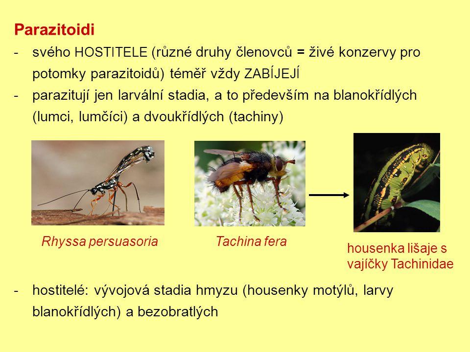 Parazitoidi -svého HOSTITELE (různé druhy členovců = živé konzervy pro potomky parazitoidů) téměř vždy ZABÍJEJÍ -parazitují jen larvální stadia, a to především na blanokřídlých (lumci, lumčíci) a dvoukřídlých (tachiny) Rhyssa persuasoria Tachina fera -hostitelé: vývojová stadia hmyzu (housenky motýlů, larvy blanokřídlých) a bezobratlých housenka lišaje s vajíčky Tachinidae