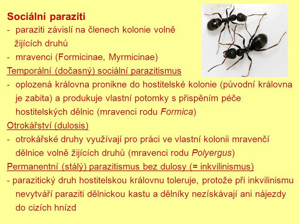 Sociální paraziti -paraziti závislí na členech kolonie volně žijících druhů -mravenci (Formicinae, Myrmicinae) Temporální (dočasný) sociální parazitismus -oplozená královna pronikne do hostitelské kolonie (původní královna je zabita) a produkuje vlastní potomky s přispěním péče hostitelských dělnic (mravenci rodu Formica) Otrokářství (dulosis) -otrokářské druhy využívají pro práci ve vlastní kolonii mravenčí dělnice volně žijících druhů (mravenci rodu Polyergus) Permanentní (stálý) parazitismus bez dulosy (= inkvilinismus) - parazitický druh hostitelskou královnu toleruje, protože při inkvilinismu nevytváří paraziti dělnickou kastu a dělníky nezískávají ani nájezdy do cizích hnízd