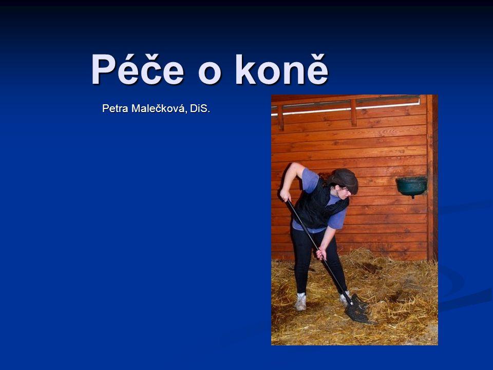 Péče o koně Petra Malečková, DiS.