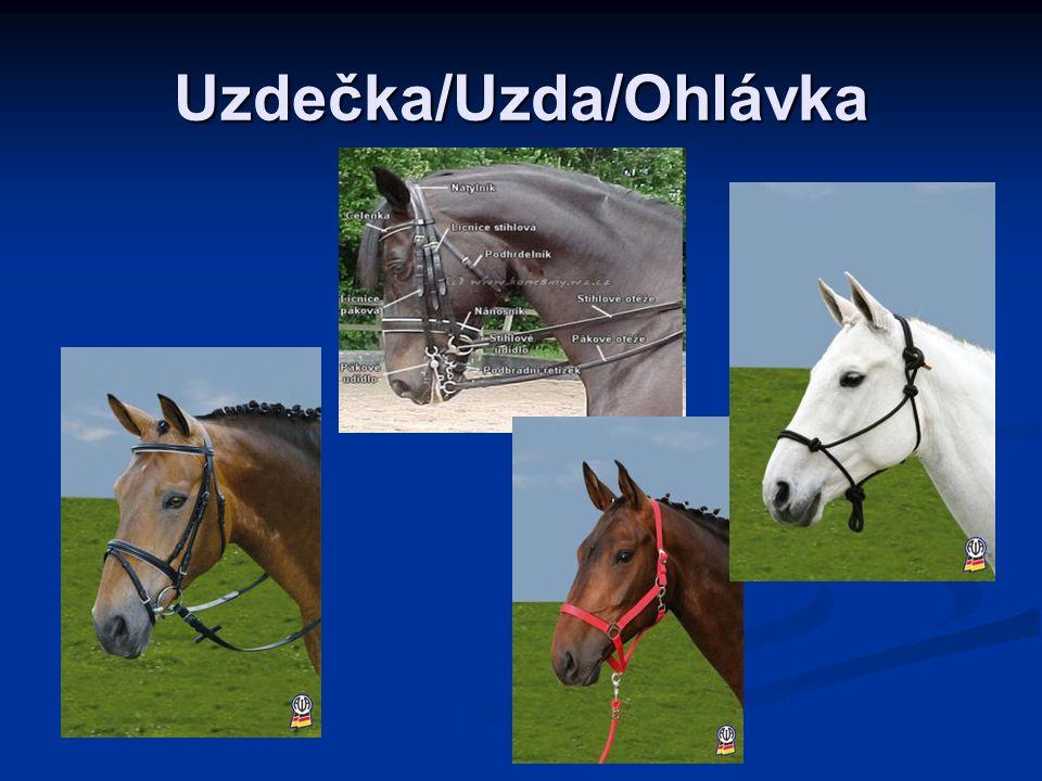 Uzdečka/Uzda/Ohlávka