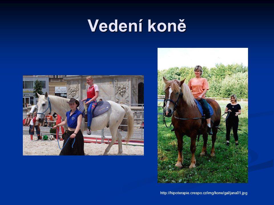 Vedení koně http://hipoterapie.crespo.cz/img/kone/gal/jana01.jpg