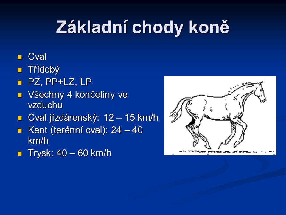 Základní chody koně Cval Cval Třídobý Třídobý PZ, PP+LZ, LP PZ, PP+LZ, LP Všechny 4 končetiny ve vzduchu Všechny 4 končetiny ve vzduchu Cval jízdárens