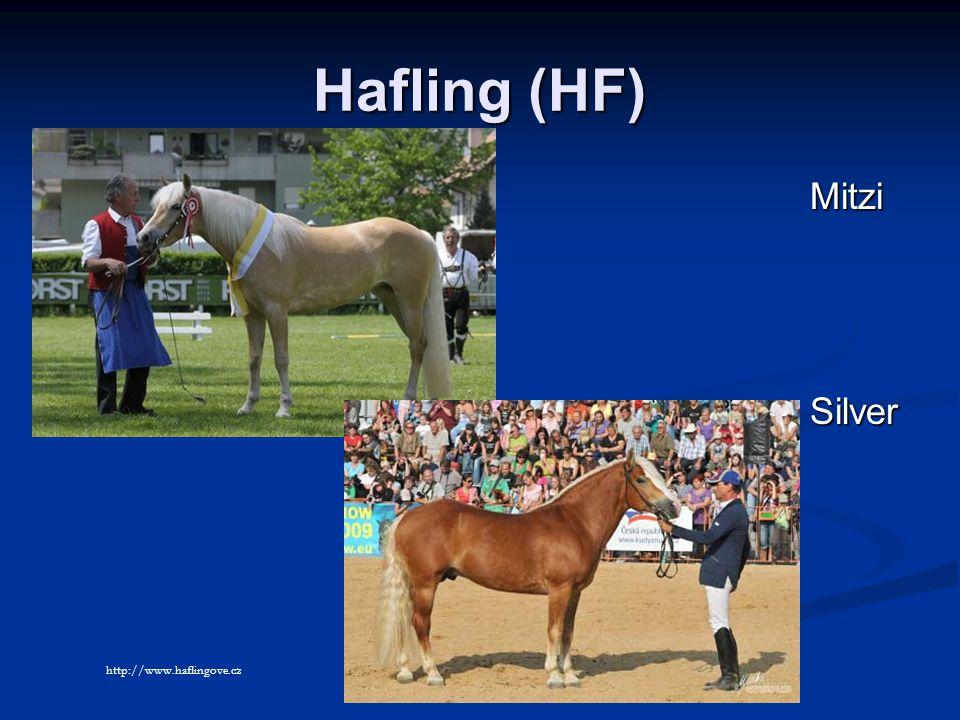 Hafling (HF) Mitzi Silver http://www.haflingove.cz