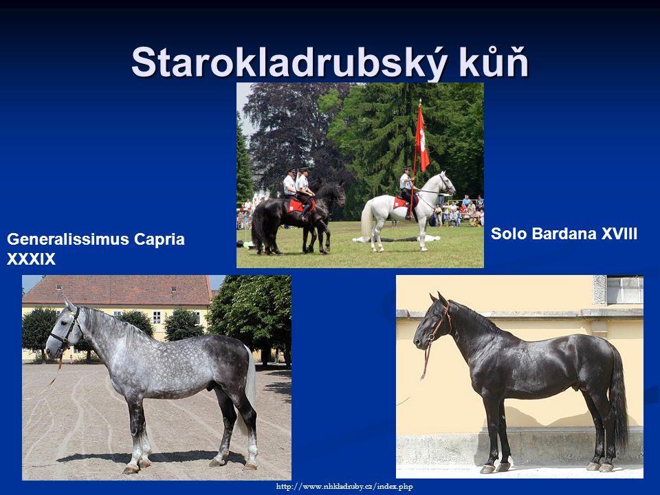 Starokladrubský kůň Solo Bardana XVIII Generalissimus Capria XXXIX http://www.nhkladruby.cz/index.php