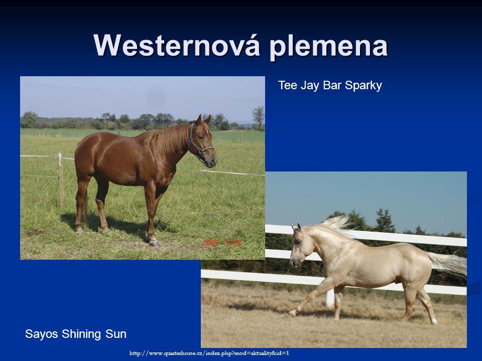 Westernová plemena Tee Jay Bar Sparky Sayos Shining Sun http://www.quarterhorse.cz/index.php?mod=aktuality&id=1
