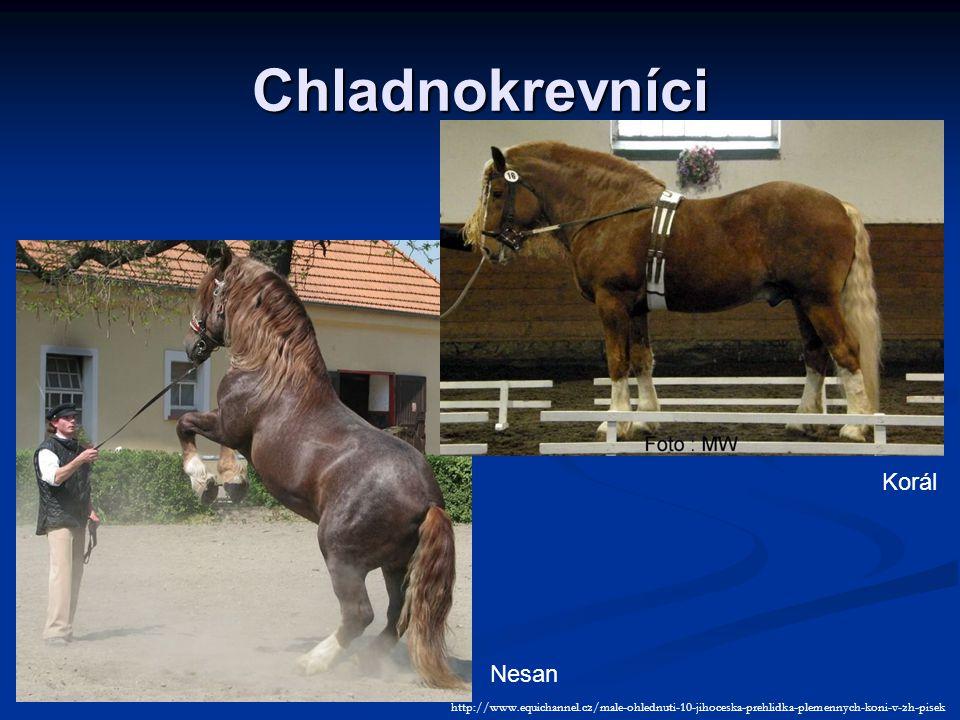 Chladnokrevníci Nesan Korál http://www.equichannel.cz/male-ohlednuti-10-jihoceska-prehlidka-plemennych-koni-v-zh-pisek