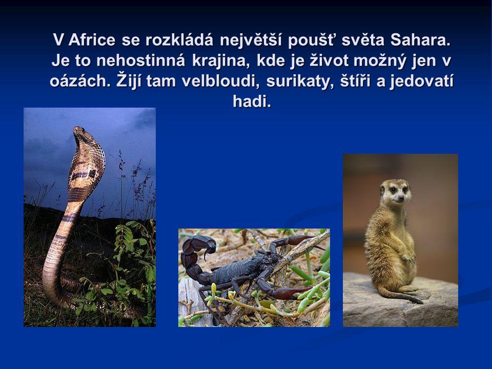 V Africe se rozkládá největší poušť světa Sahara.