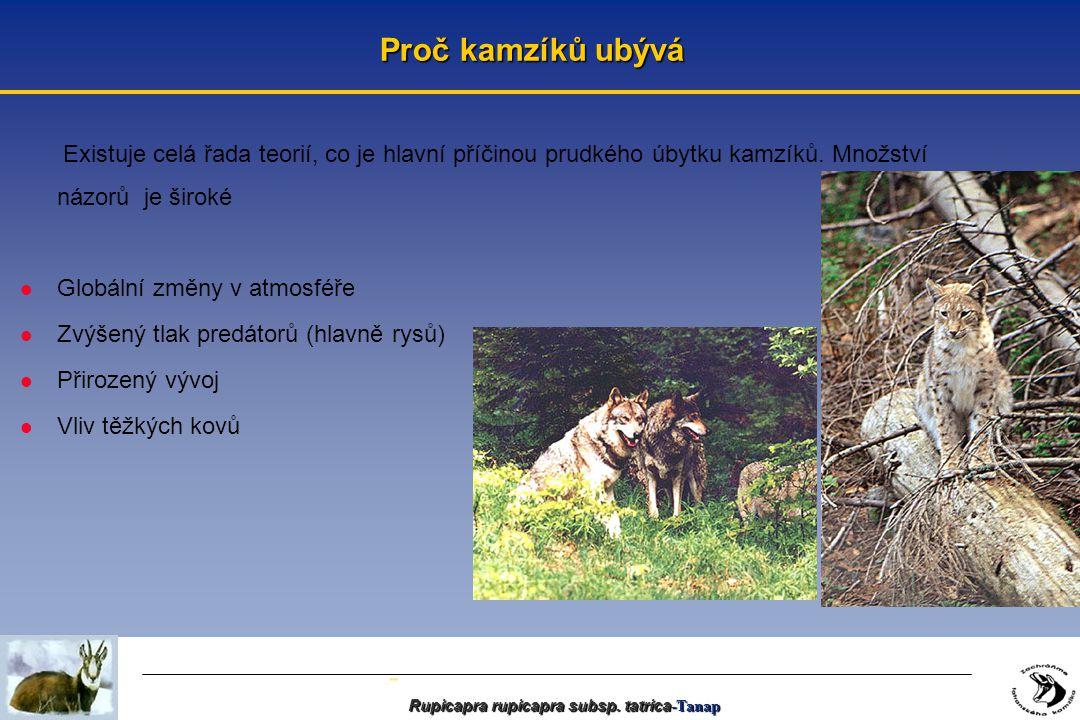 - Rupicapra rupicapra subsp.