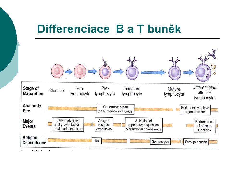 VAŠEK Diagnóza a léčba  absence všech tříd imunoglobulinů  absence B lymfocytů  prokázána mutace v genu pro Brutonovu tyrosinkinázu (BTK) – dr.