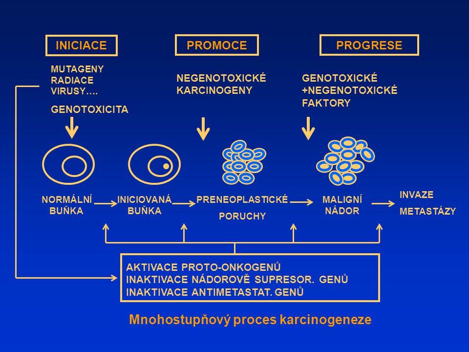 Mnohostupňový proces karcinogeneze INICIACE PROMOCEPROGRESE MUTAGENY RADIACE VIRUSY…. GENOTOXICITA NEGENOTOXICKÉ KARCINOGENY PRENEOPLASTICKÉ PORUCHY I