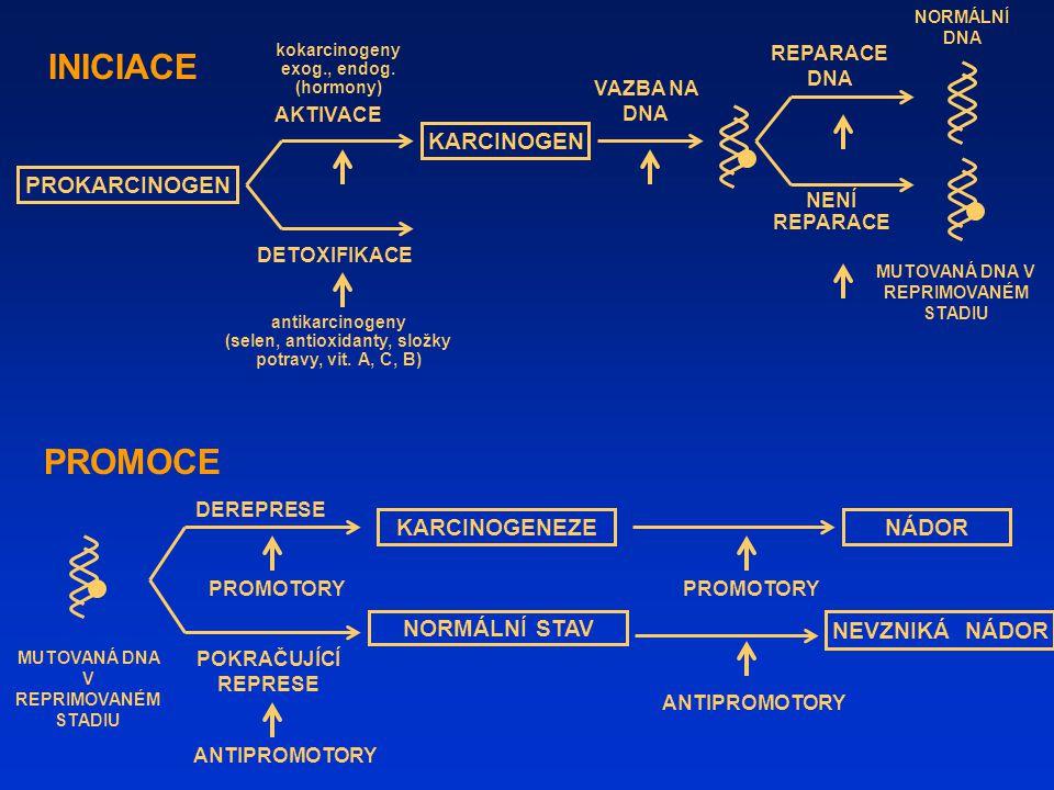 kokarcinogeny exog., endog.