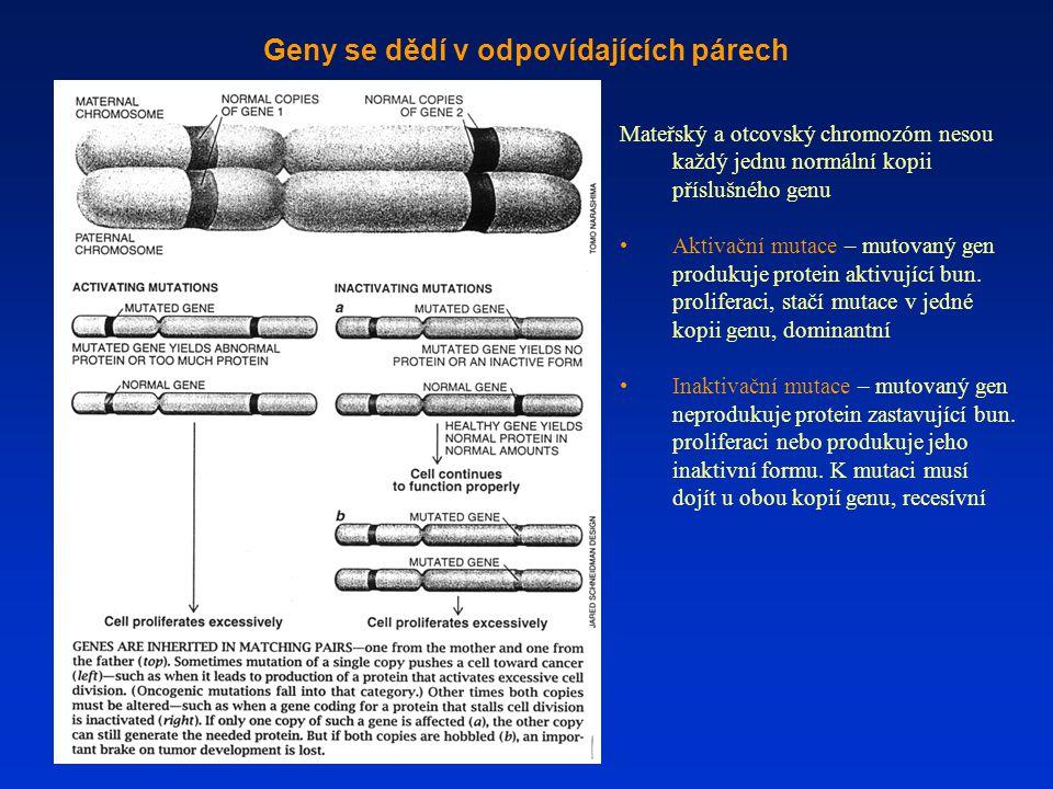 Geny se dědí v odpovídajících párech Mateřský a otcovský chromozóm nesou každý jednu normální kopii příslušného genu Aktivační mutace – mutovaný gen p