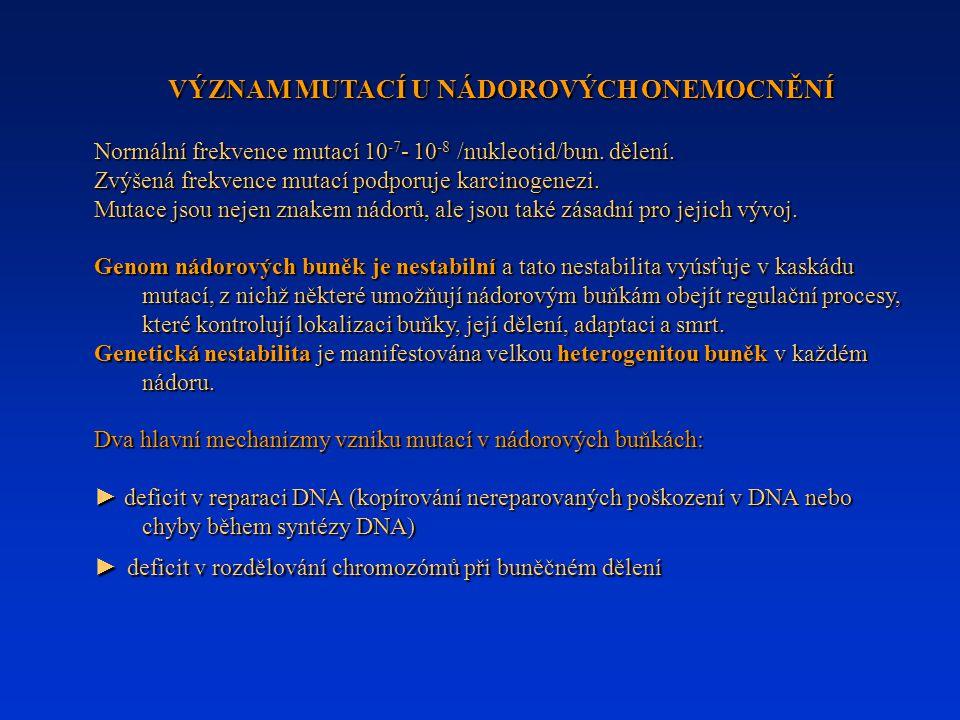 VÝZNAM MUTACÍ U NÁDOROVÝCH ONEMOCNĚNÍ Normální frekvence mutací 10 -7 - 10 -8 /nukleotid/bun. dělení. Zvýšená frekvence mutací podporuje karcinogenezi