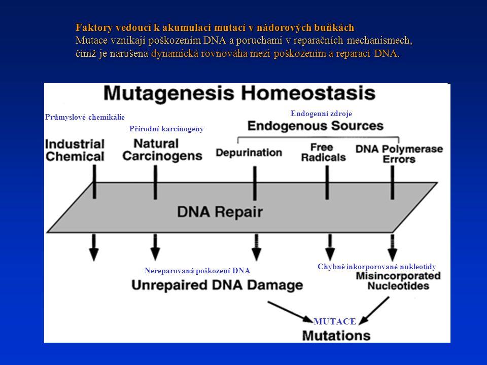 Faktory vedoucí k akumulaci mutací v nádorových buňkách Mutace vznikají poškozením DNA a poruchami v reparačních mechanismech, čímž je narušena dynami