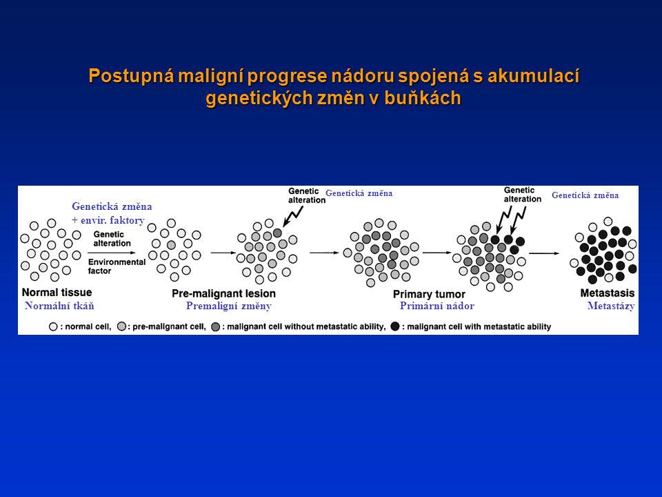 Postupná maligní progrese nádoru spojená s akumulací genetických změn v buňkách Normální tkáňPremaligní změnyPrimární nádorMetastázy Genetická změna +