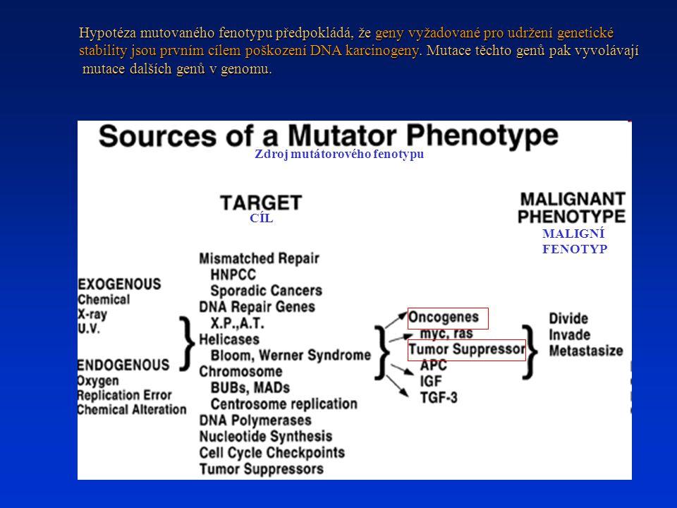 Hypotéza mutovaného fenotypu předpokládá, že geny vyžadované pro udržení genetické stability jsou prvním cílem poškození DNA karcinogeny. Mutace těcht