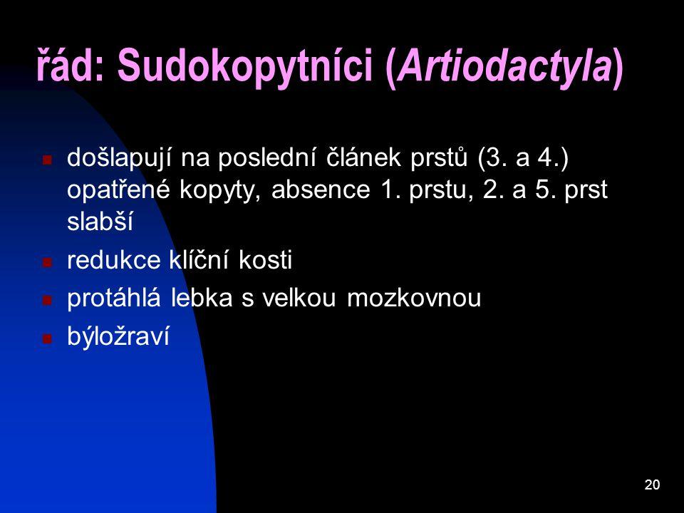 20 řád: Sudokopytníci ( Artiodactyla ) došlapují na poslední článek prstů (3. a 4.) opatřené kopyty, absence 1. prstu, 2. a 5. prst slabší redukce klí
